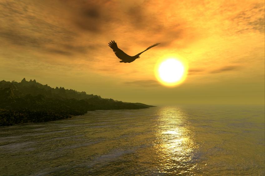 iStock_000000162969Small Eagle Coast